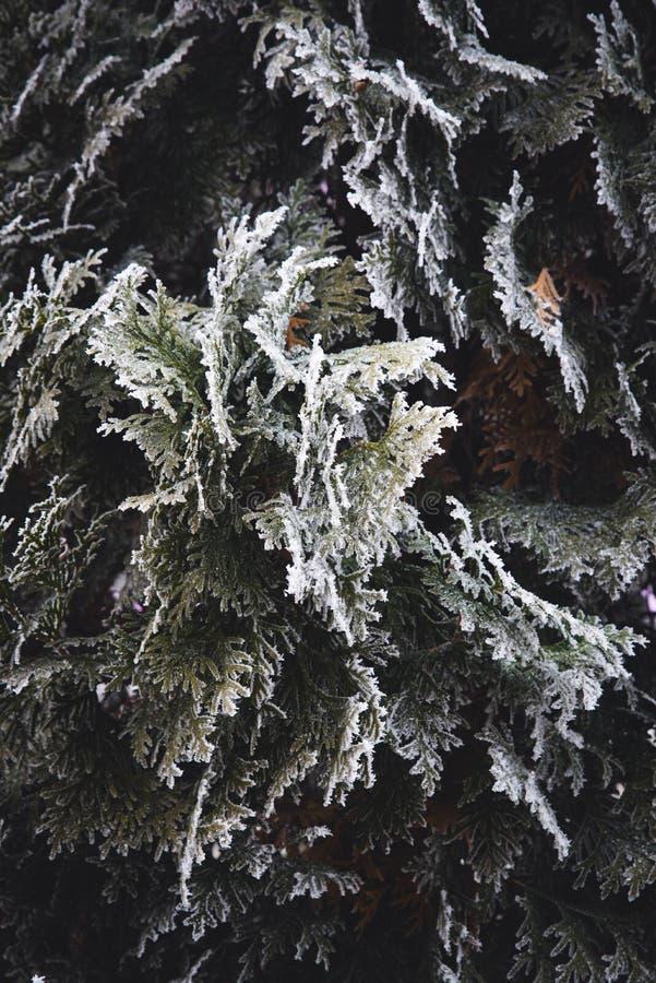 Zimy i bożych narodzeń granica zdjęcia royalty free