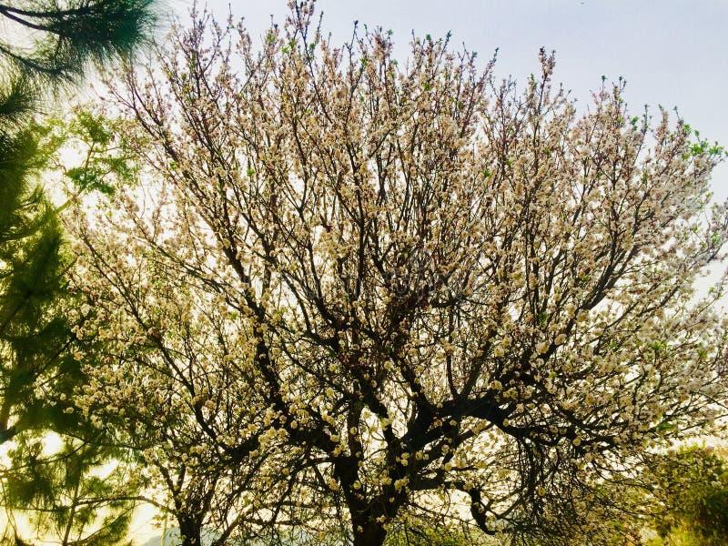 Zimy i jesieni season's drzew piękno fotografia royalty free