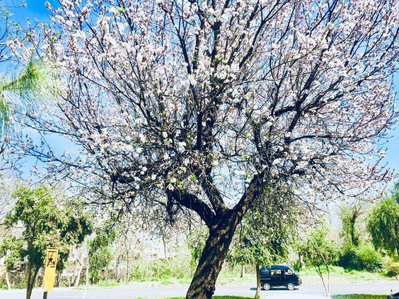 Zimy i jesieni season's drzew piękno obraz royalty free
