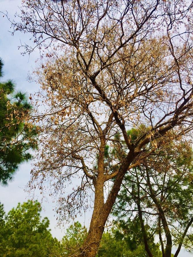 Zimy i jesieni season's drzew piękno zdjęcie stock