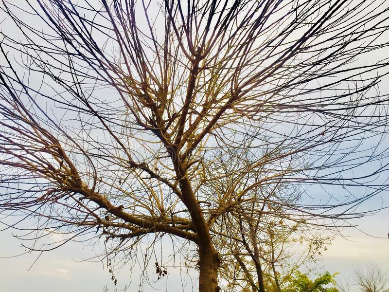 Zimy i jesieni season's drzew piękno zdjęcia royalty free