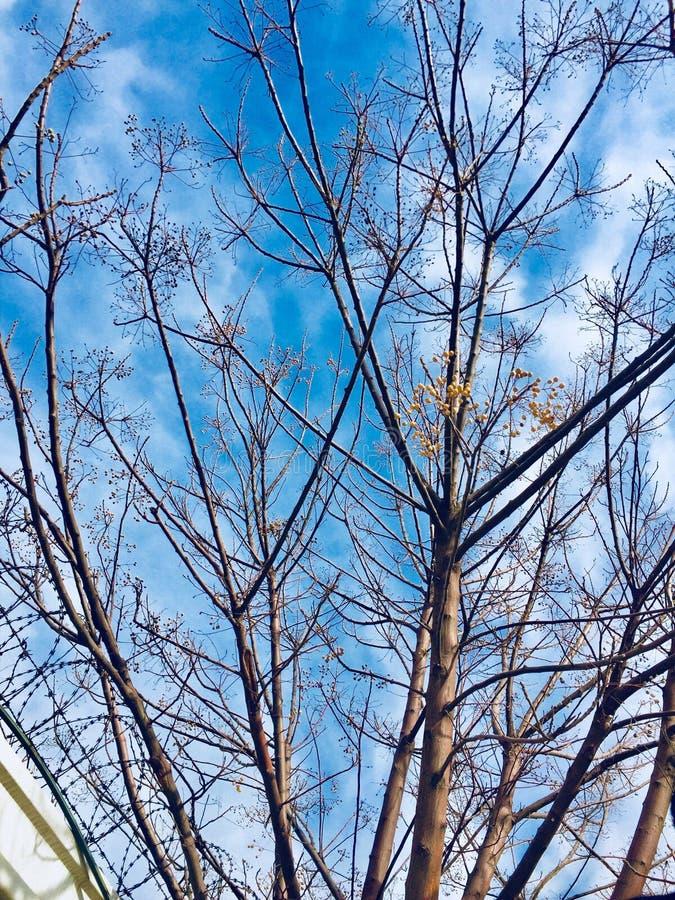 Zimy i jesieni season's drzew piękno fotografia stock