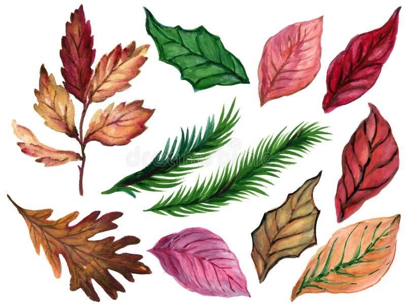 Zimy jesieni liści poinsecja i rośliny opuszczają i choinka opuszcza różną element akwareli ilustrację odizolowywa dalej ilustracji