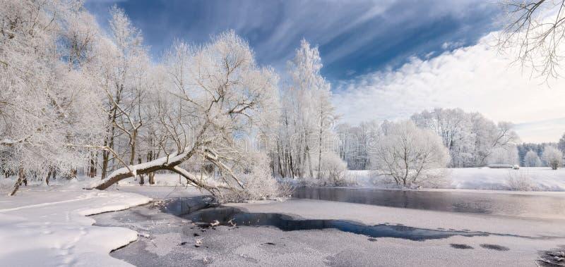 Zimy koronka: Realistyczny Panoramiczny boże narodzenie krajobraz W biel brzmieniach Z Lodowatą rzeką, Otaczającą Whitetail drzew fotografia stock