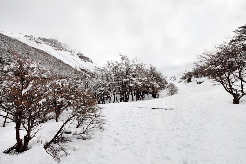 Zimy kraina cudów, Śnieżny ślad obraz stock