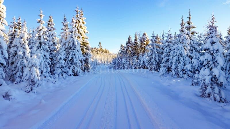 Zimy kraina cudów objętych śnieżni drzewa zdjęcie royalty free