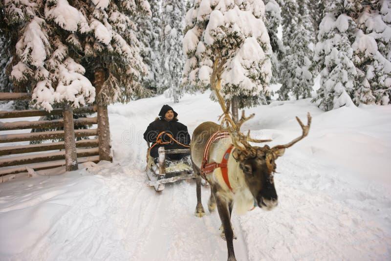 Zimy Lapland Reniferowy sanie ściga się w Ruka w Finlandia fotografia royalty free