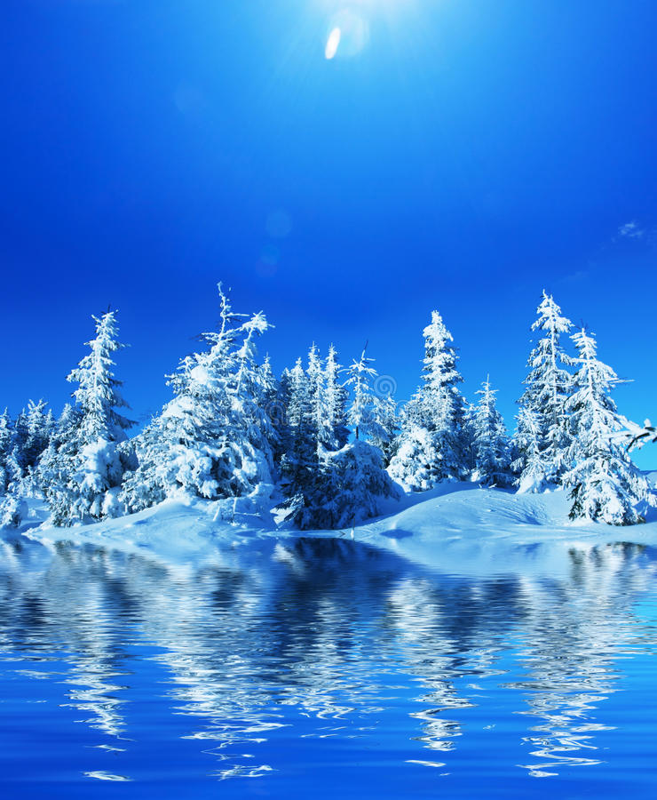 Zimy lasowe zdjęcie stock
