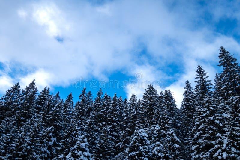 Download Zimy lasowy tło w Austria, zdjęcie stock. Obraz złożonej z zimno - 106919962