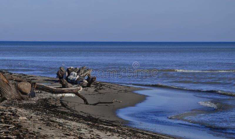 Zimy morze fotografia royalty free