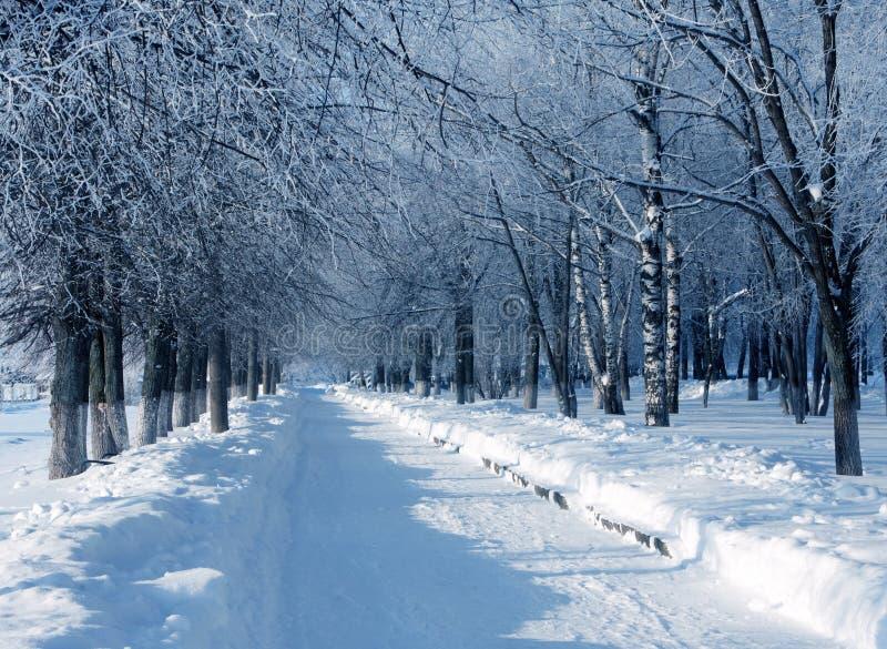 Zimy natura, aleja w parku zdjęcie stock