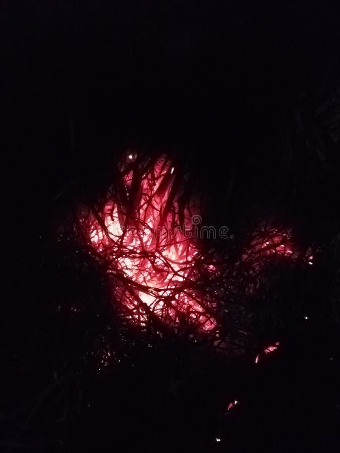 zimy naturalny pic ranek i noc zdjęcie stock