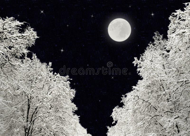 Zimy noc, drzewa pod śniegiem, księżyc w pełni i gwiazdy, zdjęcie royalty free