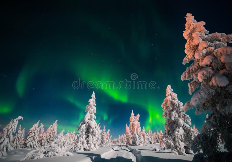 Zimy nocy krajobraz z lasu, drogowego i biegunowego światłem nad drzewami, obrazy royalty free