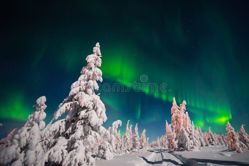 Zimy nocy krajobraz z lasu, drogowego i biegunowego światłem nad drzewami, zdjęcie royalty free