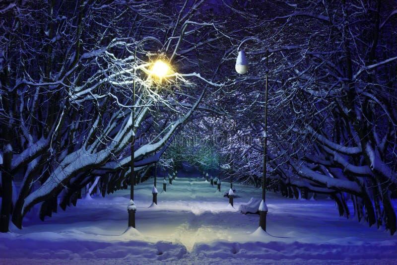Zimy nocy parkowa scena zdjęcie royalty free