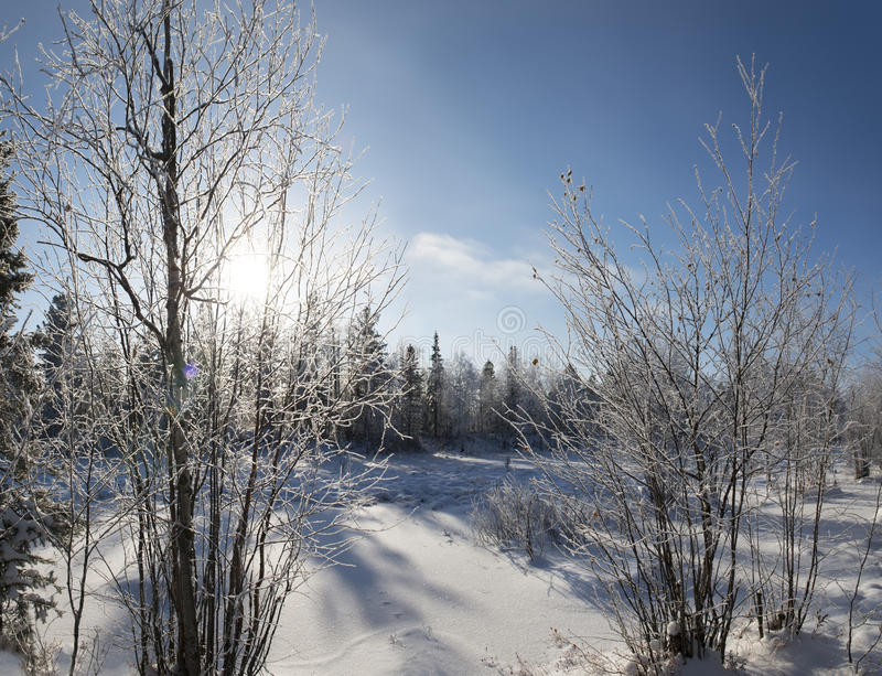 zimy panorama lasowy krajobraz w północy R obrazy royalty free
