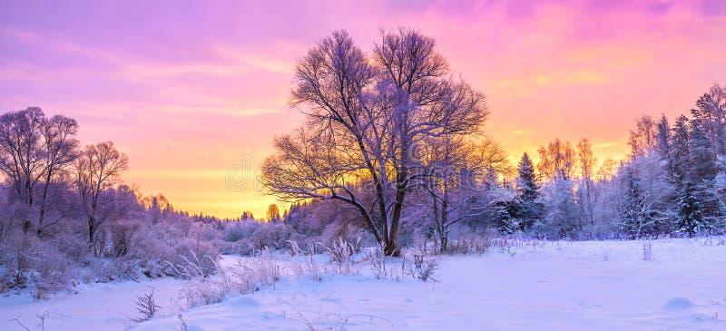Zimy panoramy krajobraz z lasem, drzewa zakrywał śnieg i su obrazy royalty free