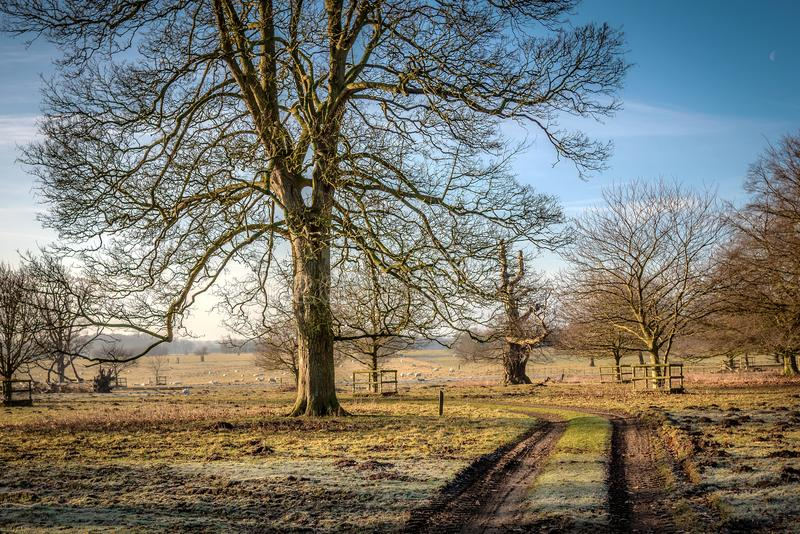 Zimy Parkland Felbrigg Hall Norfolk obraz stock