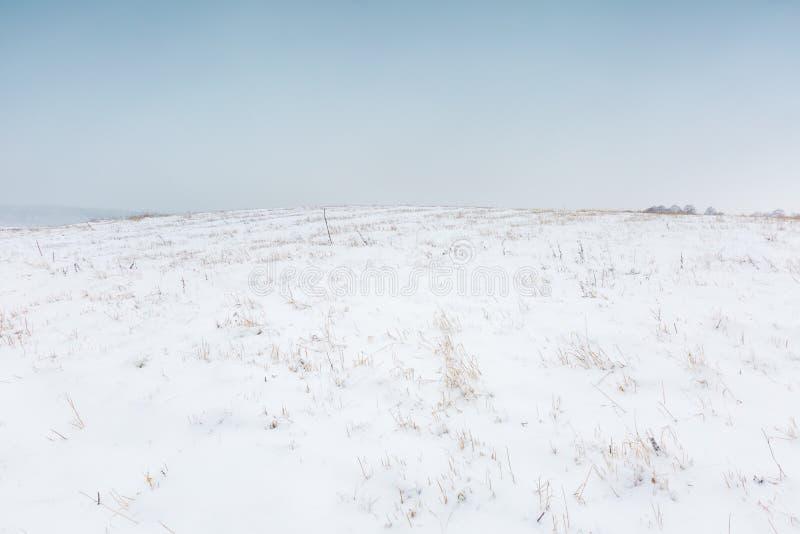 Zimy pole pod chmurnym szarym niebem zdjęcie royalty free