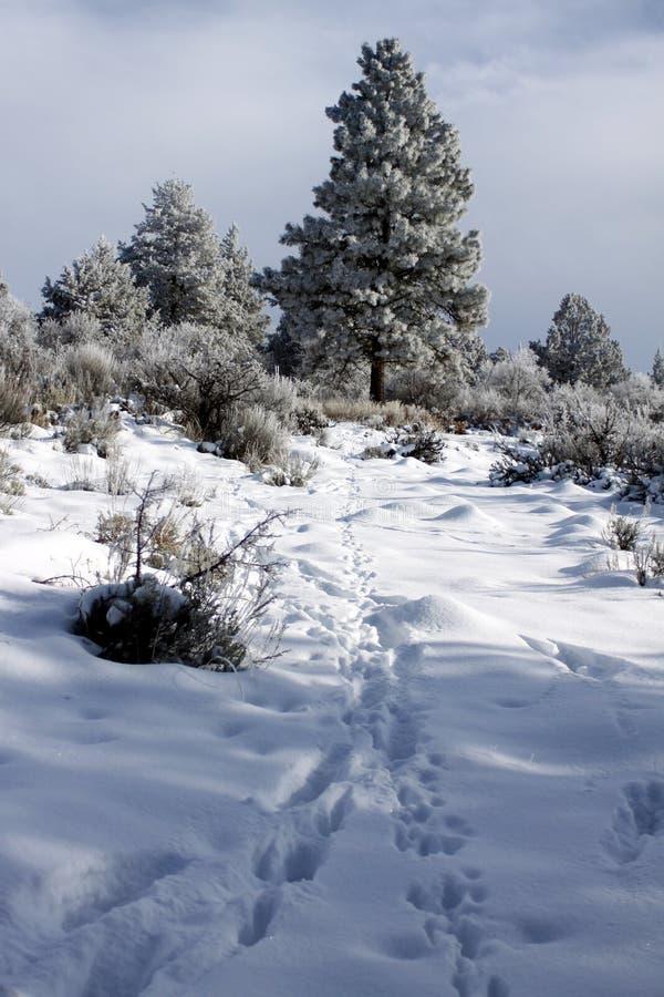 Zimy przyrody ?nie?ni ?lada w pustkowiu zdjęcia royalty free