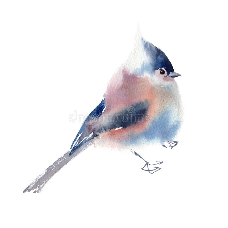Zimy puszysta miękka ptasia ręka rysująca akwarela zdjęcia stock