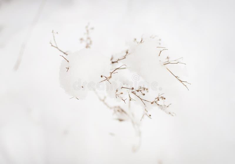 Zimy roślina z płatkami śniegu zdjęcia stock