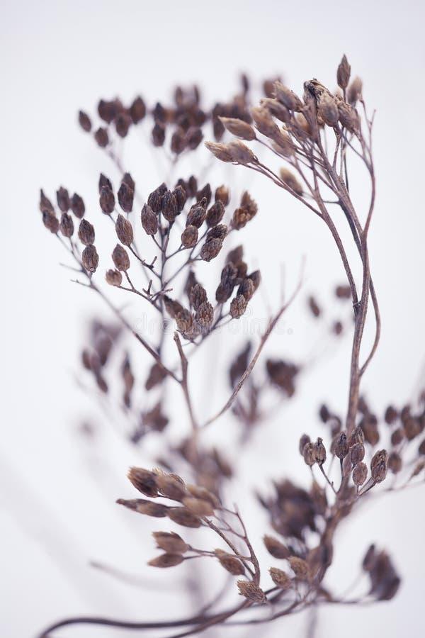 Zimy rośliny sylwetka zdjęcia stock