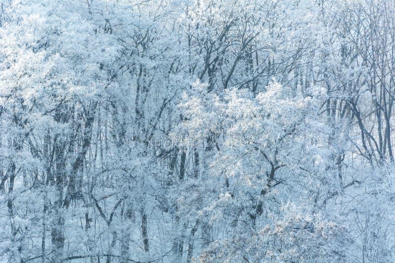 Zimy ` s bajka obraz stock