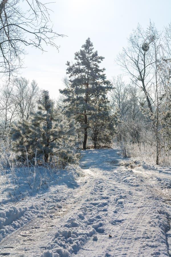 Zimy ` s bajka fotografia stock