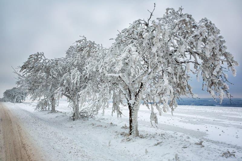 Download Zimy scena obraz stock. Obraz złożonej z grudzień, lodowaty - 28954133