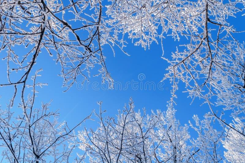 Zimy skyscape obrazy royalty free