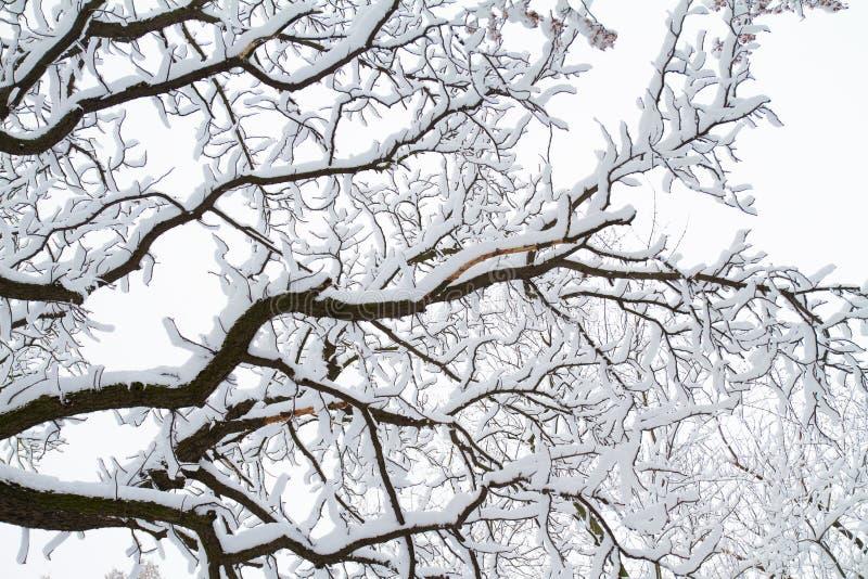 Zimy tło śnieżne gałąź przeciw niebu fotografia royalty free