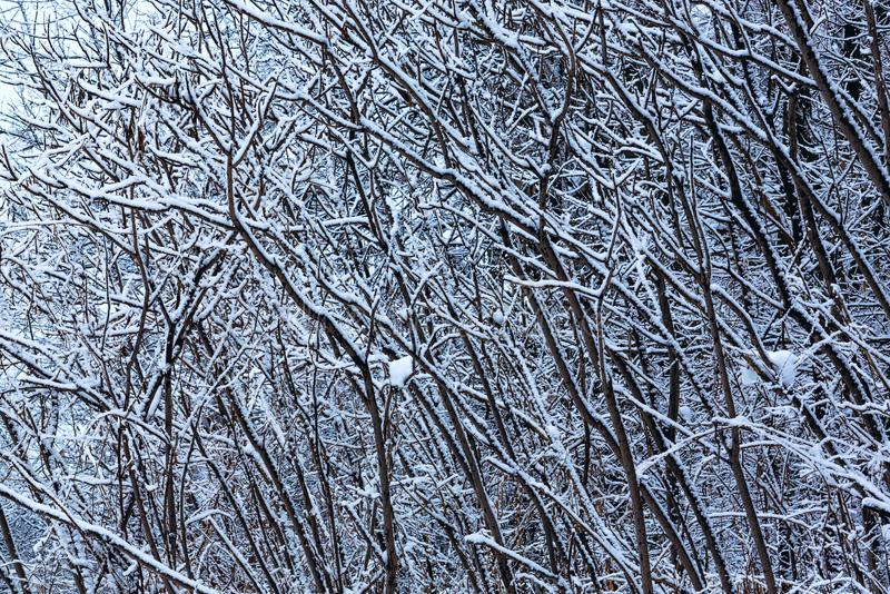 Zimy tekstura threes obrazy stock