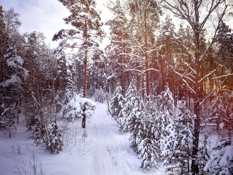 Zimy wiejska droga w lasowych drzewach w śniegu zachmurzone niebo fotografia stock