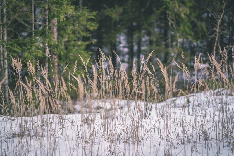 zimy wiejska scena z śnieżnymi, drzewnymi bagażnikami w b i obrazy royalty free