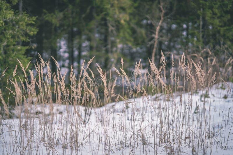 zimy wiejska scena z śnieżnymi, drzewnymi bagażnikami w b i obraz stock