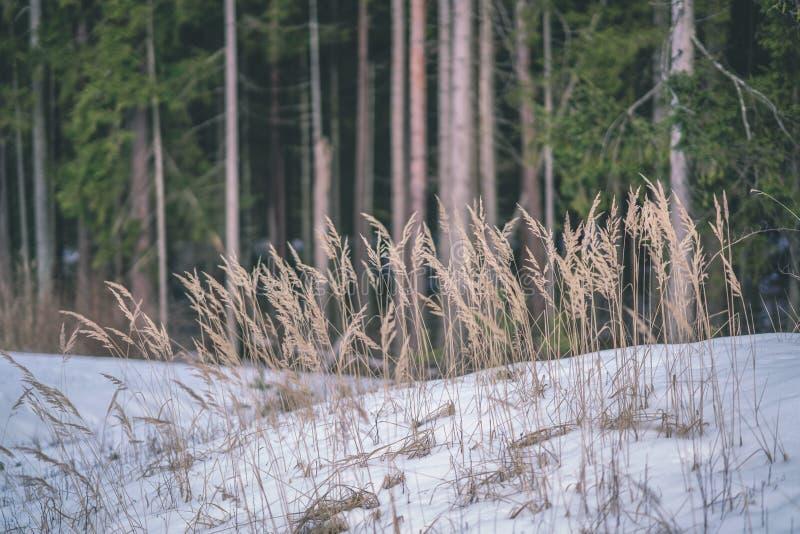 zimy wiejska scena z śnieżnymi, drzewnymi bagażnikami w b i obrazy stock