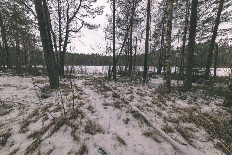 zimy wiejska scena z śnieżnymi i drzewnymi bagażnikami w zimnie - rocznik r obraz royalty free