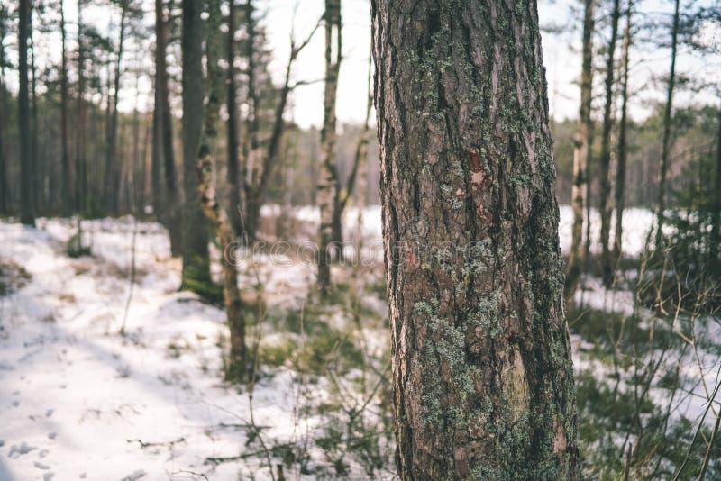 zimy wiejska scena z śnieżnymi i drzewnymi bagażnikami w zimnie - rocznik r obraz stock