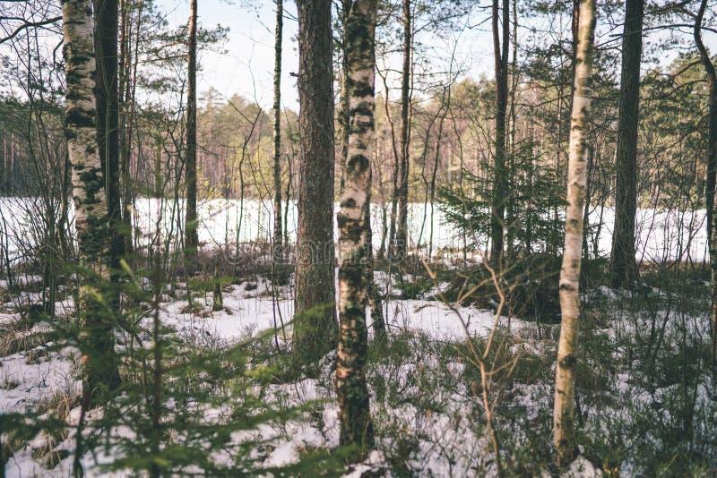 zimy wiejska scena z śnieżnymi i drzewnymi bagażnikami w zimnie - rocznik r fotografia stock