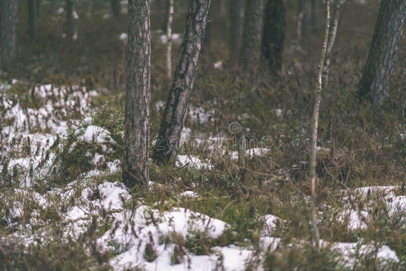 zimy wiejska scena z śnieżnymi i drzewnymi bagażnikami w zimnie - rocznik r zdjęcia stock