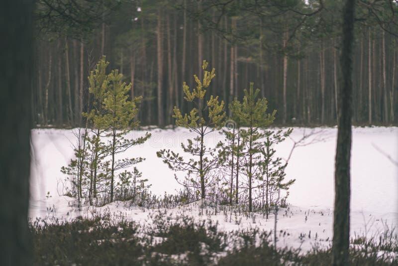 zimy wiejska scena z śnieżnymi i drzewnymi bagażnikami w zimnie - rocznik r fotografia royalty free