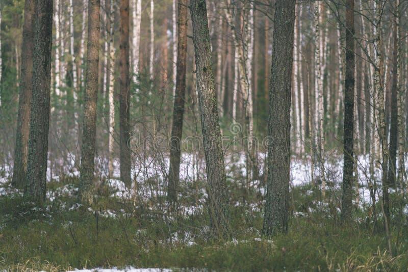 zimy wiejska scena z śnieżnymi i drzewnymi bagażnikami w zimnie - rocznik r zdjęcie stock