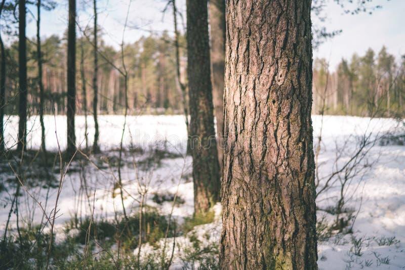 zimy wiejska scena z śnieżnymi i drzewnymi bagażnikami w zimnie - rocznik r zdjęcie royalty free