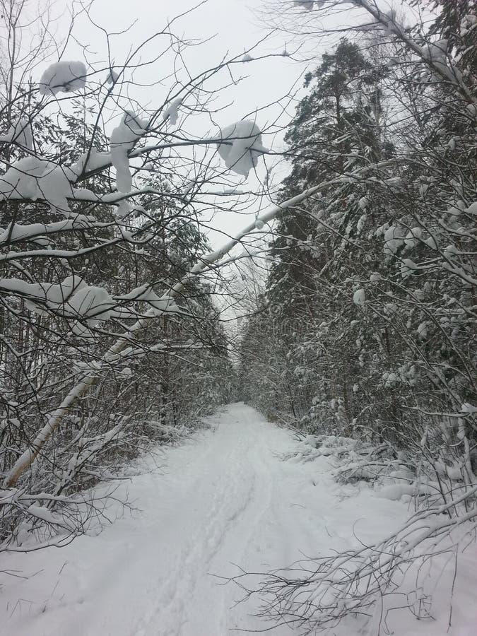Zimy wite pogodowy śnieg dobry zdjęcie royalty free