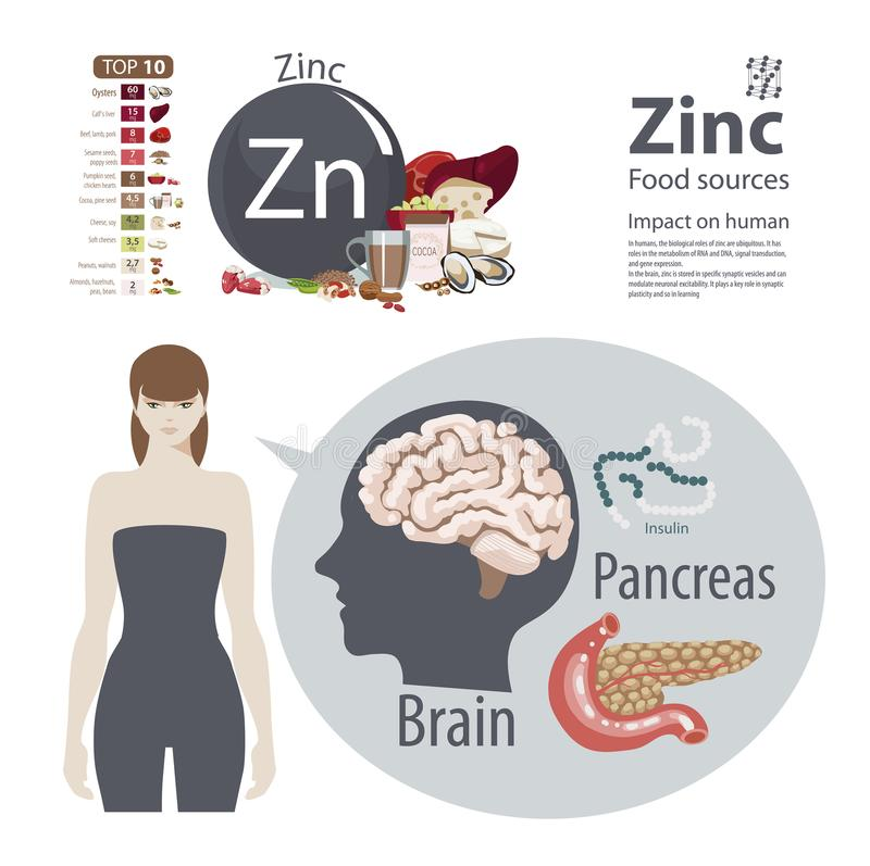 Zinc. The effect of minerals on human health. A healthy diet and a healthy lifestyle. Infographics. Zinc. Food sources and influence on human health. The effect stock illustration