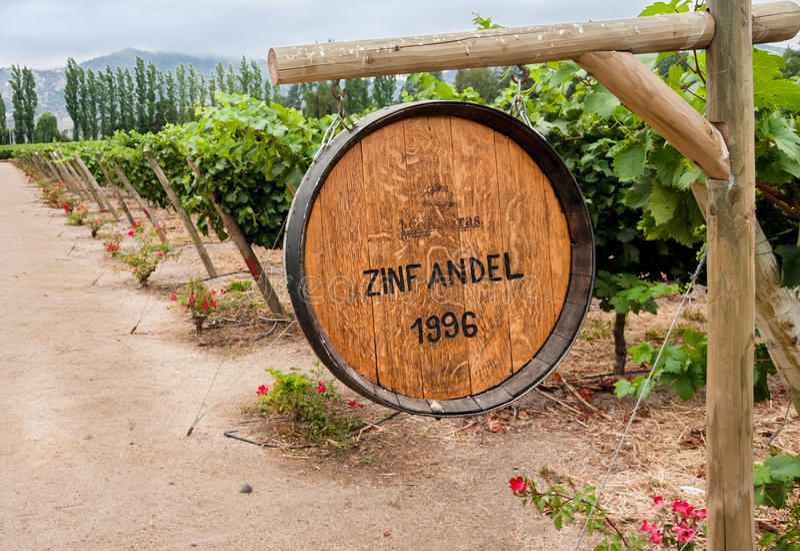 Zinfandel Wijngaard in Colchagua Vallei Chili stock fotografie