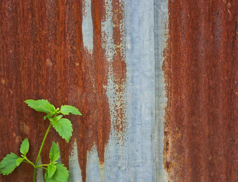 Zink göras in i ett staket royaltyfria bilder
