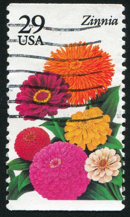 Zinnia de fleur illustration libre de droits
